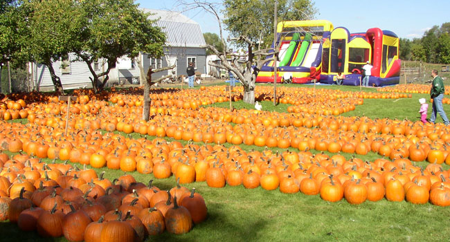 meadowbrook-pumpkin-farm-west-bend